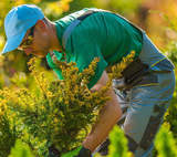 Landscaping Business Ideas to Grow Your Revenue and Customer Base